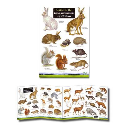 Fold-out Laminated Guide to British Land Mammals