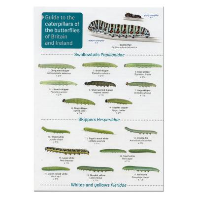 Fold-out Laminated Guide to Caterpillars