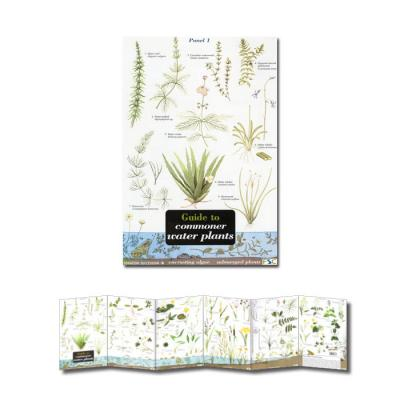 Fold-out Laminated Guide to Commoner Water Plants