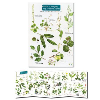Foldout Laminated Guide to Foraging Top 25 Edible Plants