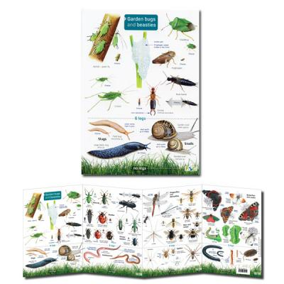 Foldout Laminated Guide to Garden Bugs and Beasties