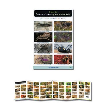 Foldout Laminated Guide to Harvestmen