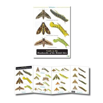 Fold-out Laminated Guide to Hawkmoths