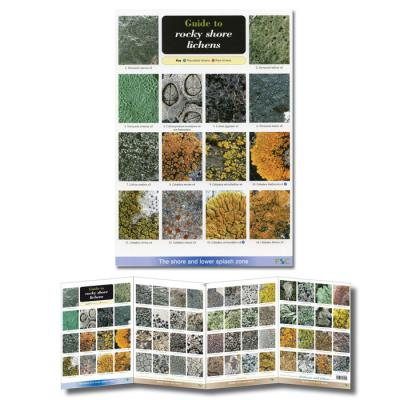Foldout Laminated Guide to Lichens of Rocky Shores