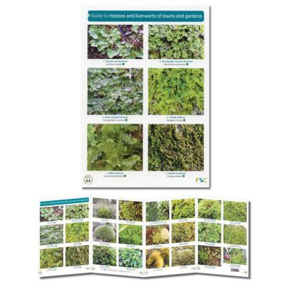 Foldout Laminated Guide to Mosses and Liverworts of Towns and Gardens