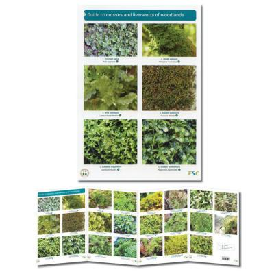 Foldout Laminated Guide to Mosses and Liverworts of Woodlands