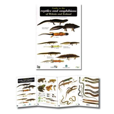 Fold-out Laminated Guide to Reptiles and Amphibians