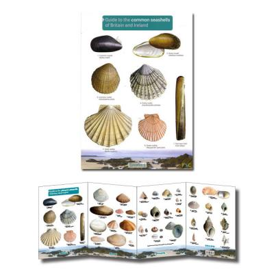 FSC Guide to the Common Seashells of Britain and Ireland