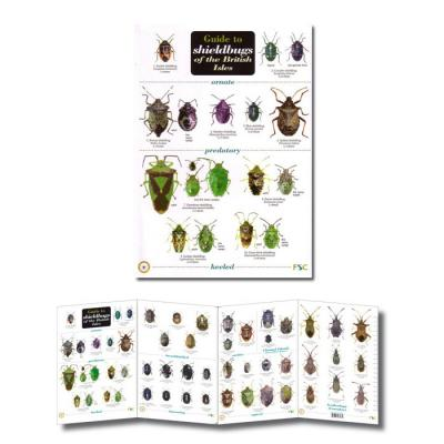 Fold-out Laminated Guide to Shieldbugs of the British Isles