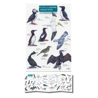 Foldout Laminated Guide to Summer Coastal Birds