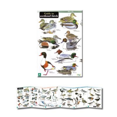Fold-out Laminated Guide to Wetland Birds
