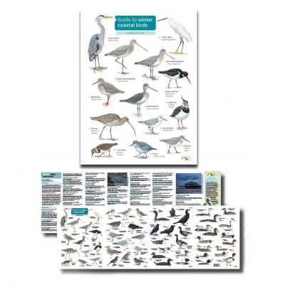 Foldout Laminated Guide to Winter Coastal Birds