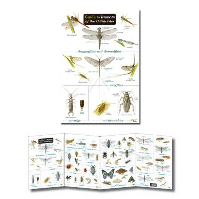Laminated Guide to Insects of the British Isles