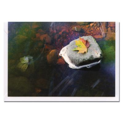 Leaf in a Stream Blank Photographic Greetings Card A6