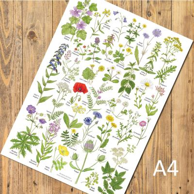 Meadow and Grassland Wild Flowers A4 Identification Poster