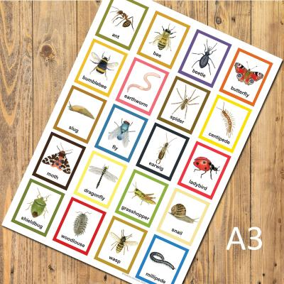 Childrens Garden Minibeasts Invertebrates Insects A3 Identification Poster