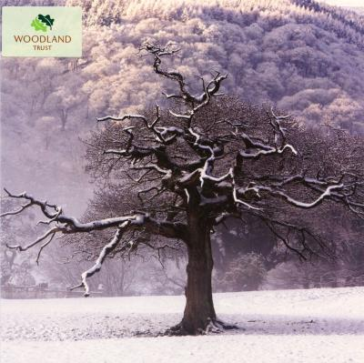 Oak Tree in Winter Blank Photographic Greetings Card
