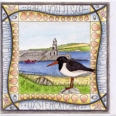 Oystercatcher Port Logan Blank Greetings Card