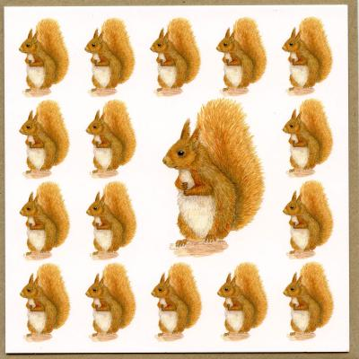 Red Squirrel Blank Greetings Card