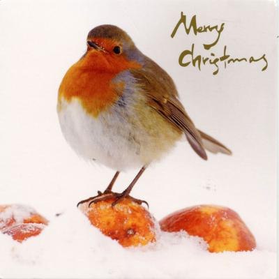 Robin in the Snow 6 Blank Christmas Cards