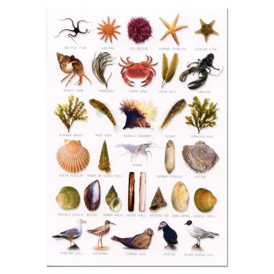 Seashore Identification Postcard
