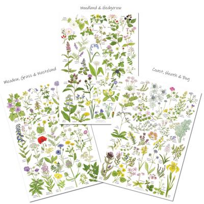 Set of 3 A4 Wild Flowers A4 Identification Poster