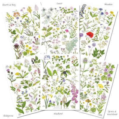 Set of Six A5 Wild Flowers A5 Identification Postcards