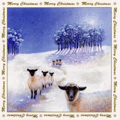Sheep in the Snow 6 Blank Christmas Cards