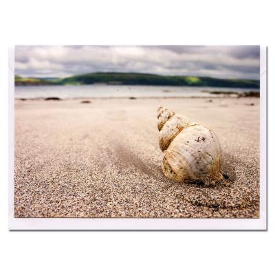 Shell on a Beach Blank Photographic Greetings Card A6