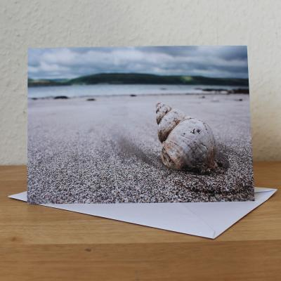 Shell on Beach Blank Photographic Greetings Card