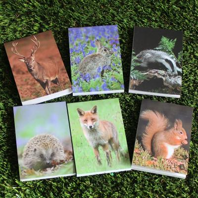 Six Mini Animal Note Pads