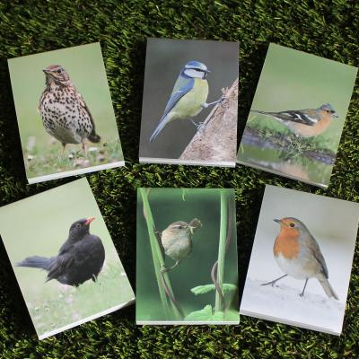 Six Mini Bird Note Pads