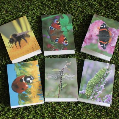 Six Mini Insect Note Pads