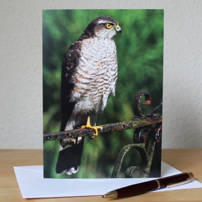 Sparrowhawk Large A5 Blank Photographic Greetings Card