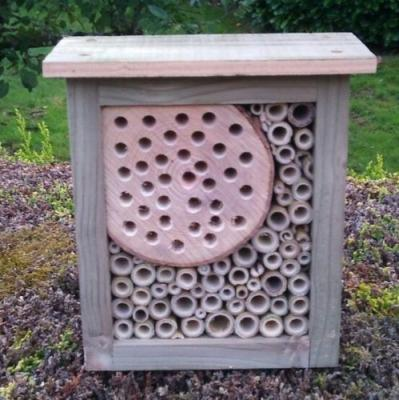 Square Bee and Bug Box