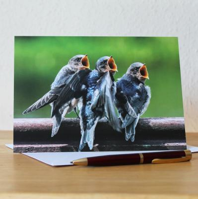Swallows Large A5 Blank Photographic Greetings Card