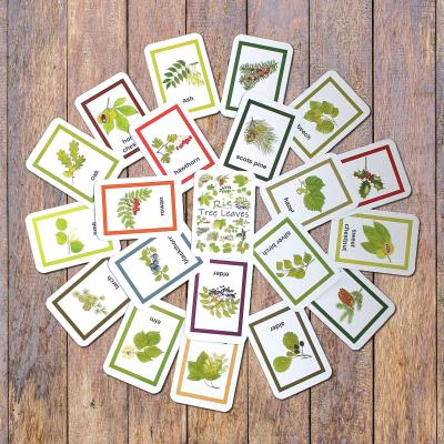 Childrens Tree Leaves Flashcards