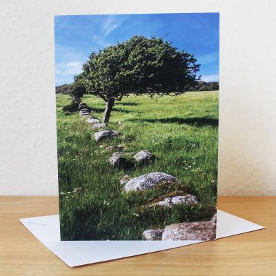 Tree Sandyhills Dumfries & Galloway Blank Photographic Greetings Card