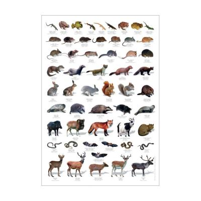 Wildlife Identification Poster