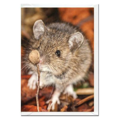 Wood Mouse Blank Photographic Greetings Card A6