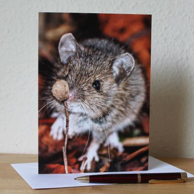 Wood Mouse Blank Photographic Greetings Card