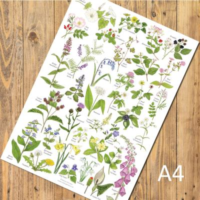Woodland and Hedgerow Wild Flowers A4 Identification Poster
