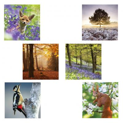 Woodland Trust Notecards 3 Pack of 6
