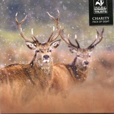 Wildlife Trusts Red Deer Stags Charity Christmas Cards