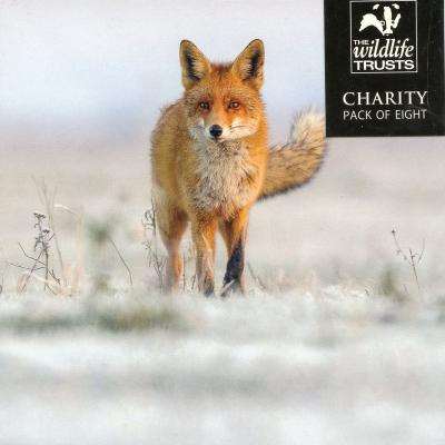 Wildlife Trusts Red Fox Pack of Christmas Cards