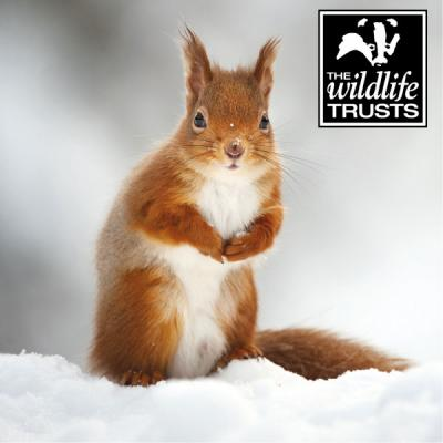 Wildlife Christmas Cards.Wt Red Squirrel Christmas Cards