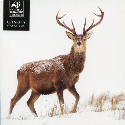 Wildlife Trusts Stag in the Snow Charity Christmas Cards