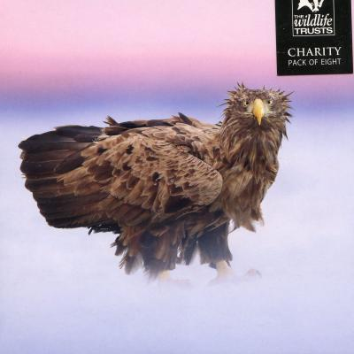 Wildlife Trusts White Tailed Eagle Charity Christmas Cards
