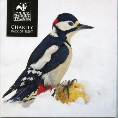 Wildlife Trusts Great Spotted Woodpecker Charity Christmas Cards