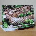 Adder Photographic Greetings Card